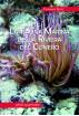 La fauna marina della Riviera del Conero